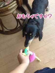 おもちゃで遊ぶ?