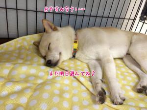 おやすみなさいー