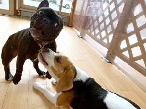 首輪が気になる犬ちゃん。