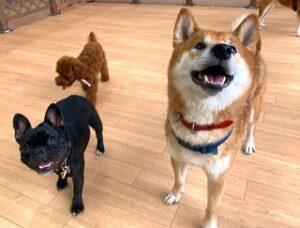 ペットホテルをお散歩中の犬ちゃん達