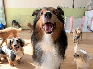 ペットホテルにはお友達がいっぱい!