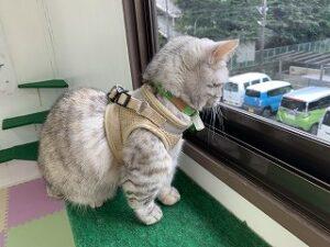 ペットホテルの外を眺める猫ちゃん