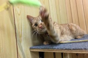 猫ちゃんパンチ