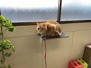 猫ちゃんアスレチック
