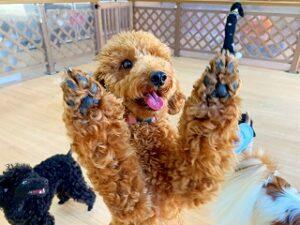 バンザイをする犬ちゃん