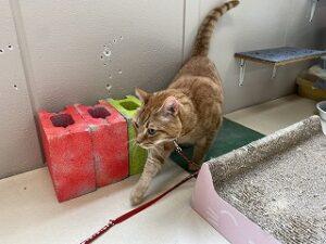 猫ちゃん抜き足