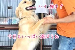 犬ちゃんと握手