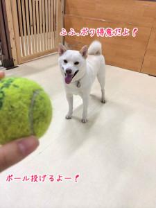 ボールは得意だよ♪