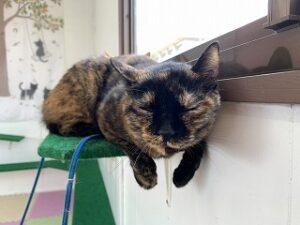 猫ちゃん休憩中