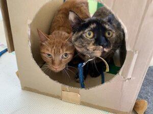 猫ちゃん仲良くトンネルに