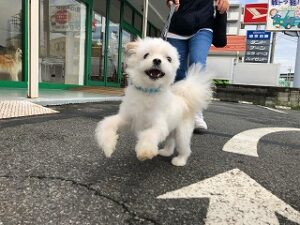 お散歩が大好きな犬ちゃん。