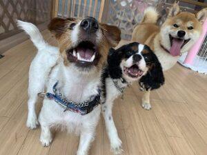 にこにこ笑顔で遊ぶ犬ちゃんたち