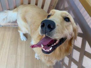 笑顔の犬ちゃん