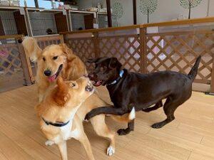 犬ちゃん達のお遊び