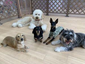 ペットホテルのプレイエリアでくつろぐ犬達