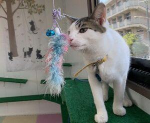 猫ちゃんおもちゃに興味津々