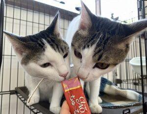 猫ちゃんチュール大好き