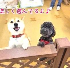 楽しく遊ぶ犬