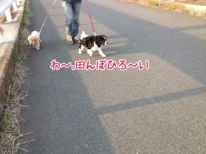 ペットホテル 見沼田んぼお散歩