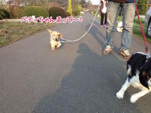 見沼田んぼ出ペットホテルのお散歩