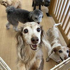 ペットホテルの犬ちゃんたち