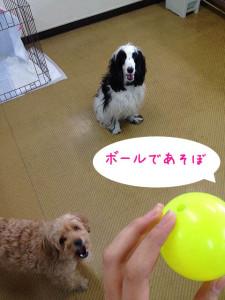 ペットホテル ボール遊び