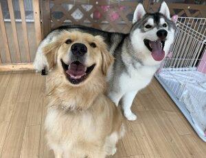 犬ちゃん仲良しコンビ