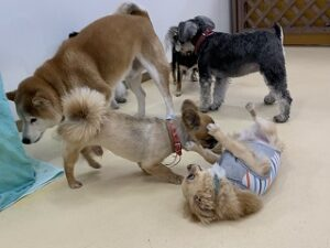 犬ちゃんを捕まえる犬ちゃん