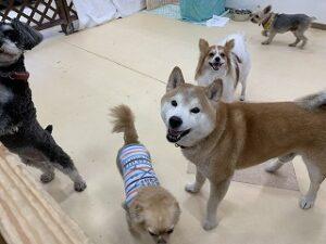 カメラ目線の犬ちゃん