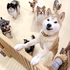 犬ちゃんが沢山ペットホテルでお泊りしています