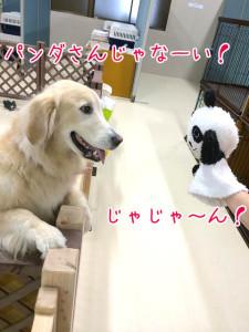 パンダさんだ!