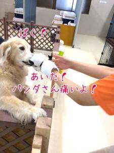 ぱっくり!