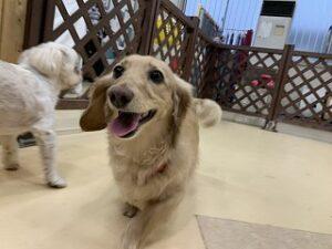犬ちゃんにこにこ笑顔