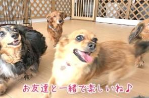 犬友達と一緒
