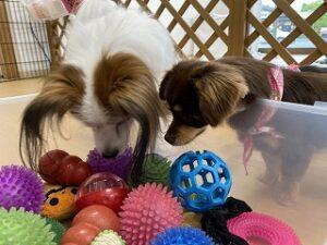 犬ちゃんおもちゃが大好き