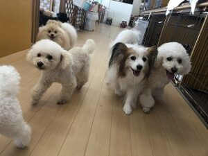 楽しそうに遊ぶ犬ちゃんたち