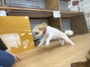 ペットホテルで走り回る犬ちゃん