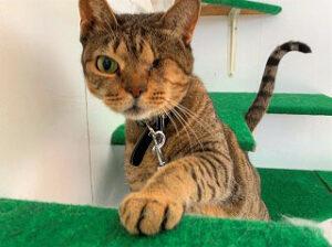 ペットホテルでお散歩中の猫ちゃん。