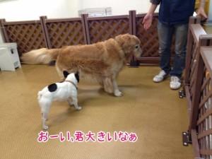 ペットホテル 大型犬わんちゃん