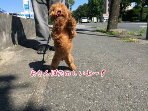 お散歩大好き!