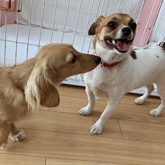 二頭のお犬様