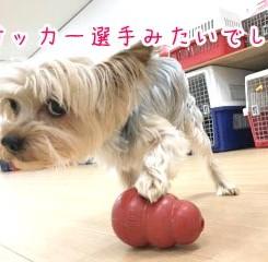 サッカー選手犬