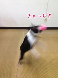きゃっち!