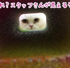 IMG_8463