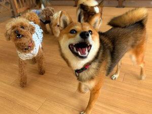 お友達がいっぱいで嬉しそうな犬ちゃん。