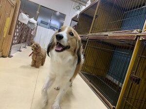 逃げる犬ちゃん