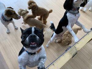 ペットホテルは犬ちゃんがいっぱい