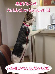 猫ちゃんの店番
