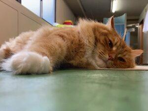 のんびりモードな猫ちゃん。