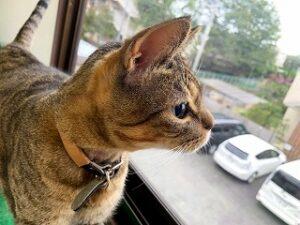 窓の外を眺める猫ちゃん